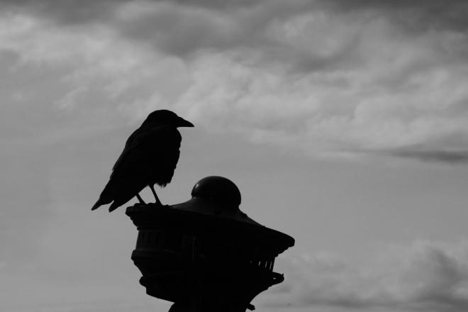 The Rosebery Crow