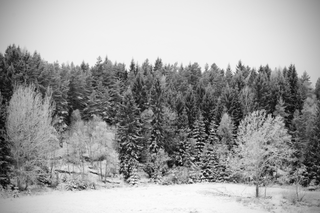 Monochrome Woodland