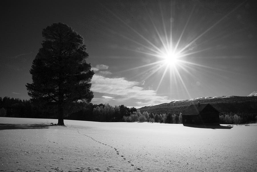 The Snow Reveals